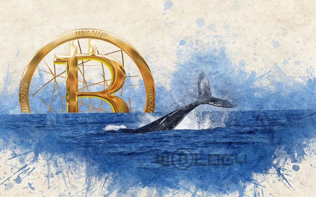 bitcoin balinalar